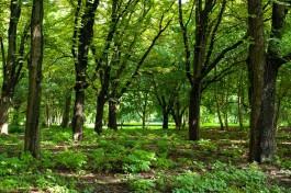 Власти Калининграда разрешили вырубку деревьев на месте будущего бассейна в Южном парке