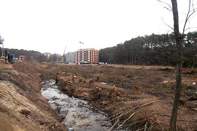 Бизнесмена, вырубившего деревья под строительство «Лэйк Сити» вСветлогорске, оштрафовали на млн