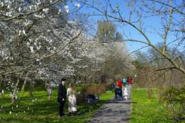Ботанический сад Калининграда закроют почти на неделю из-за вручения дипломов