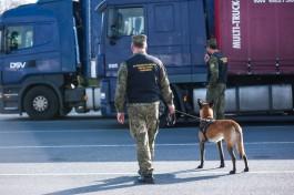 «Шерстяная таможня»: с начала года на границе собаки нашли 78 партий «запрещёнки»