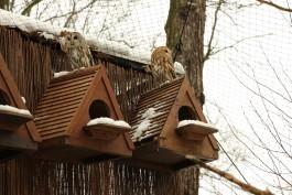 В калининградском зоопарке сов переселили в новый вольер