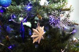 В Калининградскую область не пустили более тысячи новогодних елей из Латвии