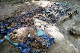 Калининградские поисковики нашли в лесополосе место крушения ИЛ-2 и останки советских лётчиков