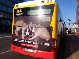 В Польше ужесточат закон о защите животных
