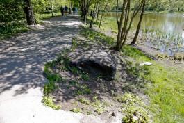 Компания депутата Горсовета благоустроит Летнее озеро в Калининграде за 55 млн рублей