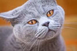 Депутаты намерены запретить калининградцам держать больше двух животных в квартире