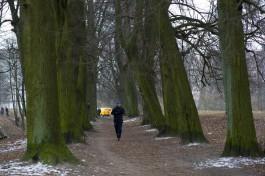 Как же правильно обрезать деревья в Калининграде?