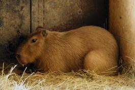 Контактные зоопарки в России запретят посетителям трогать животных