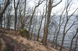 Региональные власти хотят отсудить у Балтийска 17 гектаров леса на побережье