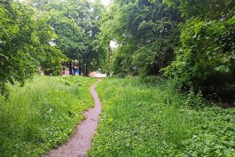 Алиханов: Практически весь Суздальский лес будет зелёной территорией