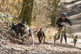«Человек собаке друг»: под Ладушкиным прошёл международный турнир по ездовому спорту