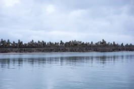 «Весьма дерзкие люди»: в СК рассказали подробности хищения 1,6 млрд рублей на стройке порта в Пионерском