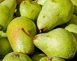 В Зеленоградском округе планируют заложить 10 гектаров грушевого сада
