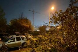 Сильный ветер в Калининграде повалил деревья на семь автомобилей и два жилых дома