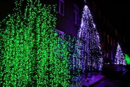 Ярошук призвал калининградцев «дать пинка» вандалам, ворующим новогодние украшения с улиц