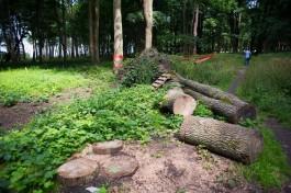 Прокуратура: В Калининграде незаконно вывели из лесного фонда 3,5 га земли под строительство автотрека