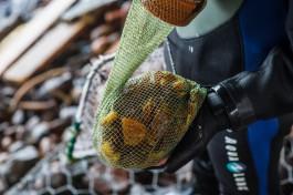В Калининградской области на двух дайверов завели уголовное дело за добычу янтаря