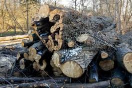 На стройплощадке детского сада в микрорайоне Космодемьянского вырубят 263 дерева