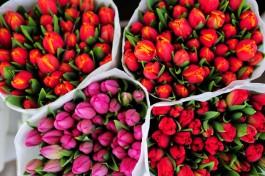 К 8 Марта эксперты ожидают повышение цен на цветы в России до 40%