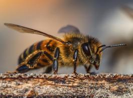 Ужаленный пчёлами житель Мамоново отсудил у хозяина пасеки 15 тысяч рублей