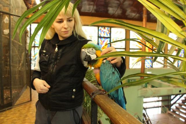 Калининградского попугая лечат музыкой Сергея Шнурова