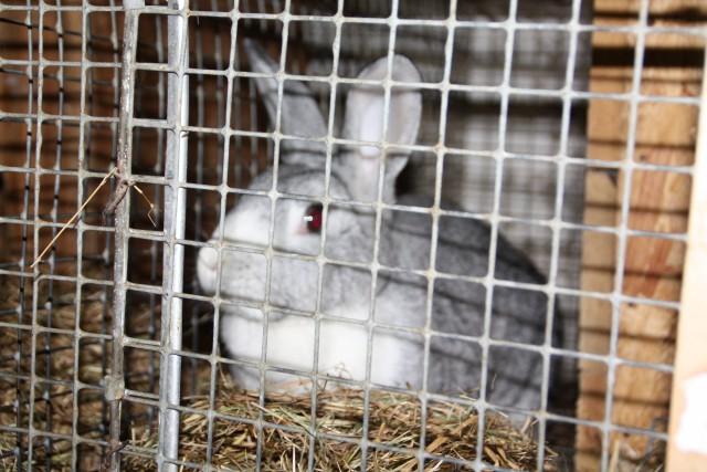 В Зеленоградском округе хотят выращивать кроликов и продавать мясо по 300 рублей за килограмм