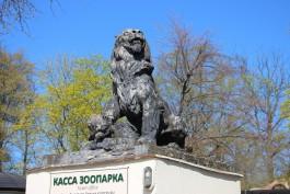 «Отольют новые из бронзы»: в пятницу со входа в калининградский зоопарк демонтируют скульптуры львов