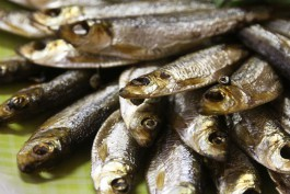 Депутаты Облдумы предложили развивать в регионе материковое рыболовство