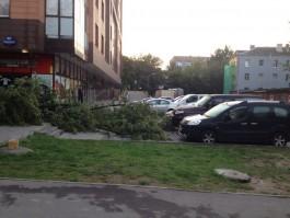 За выходные сильный ветер повалил в Калининграде 126 деревьев, повреждено 25 машин