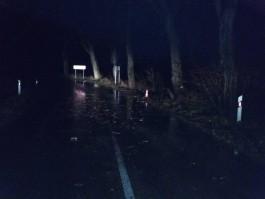 УМВД об аварии с тремя погибшими под Зеленоградском: Водитель «Ауди» ездил без прав