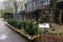 Калининградский зоопарк закупает деревья и травянистые растения почти на 1,5 млн рублей