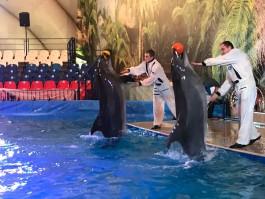 «Опера от кита и картина от дельфина»: спешите посетить дельфинарий в «Резиденции королей»