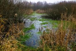 Мэрия предупреждает о зелёной воде в калининградских ручьях