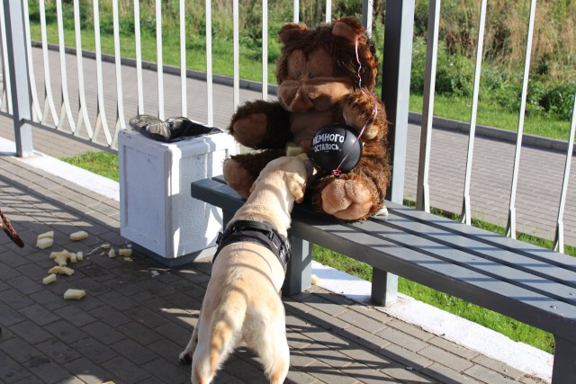 ВКалининграде эвакуирована ЖД-станция из-за медведя сзагадочным посланием