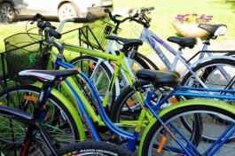 Власти планируют начать строительство велодорожки от Куршской косы до Светлогорска в 2018 году