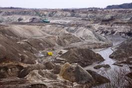 Власти Зеленоградска пытаются заставить янтарный комбинат высадить 2000 деревьев вместо вырубленных
