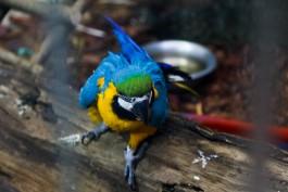 «Ары, мары, трубкозуб»: в зоопарке открыли «Дом тропических птиц»