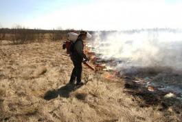 В Калининградской области объявили пожароопасный сезон