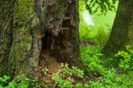В лесу под Неманом нашли тело пропавшего грибника