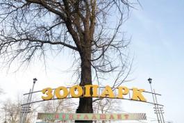 Калининградский зоопарк запустил онлайн-продажу билетов на Масленицу