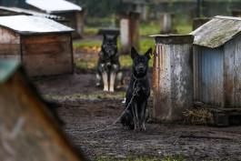 «Известия»: В России катастрофически не хватает приютов для бездомных животных