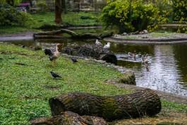 В калининградском зоопарке из-за нападения бродячих собак погибли четыре птицы