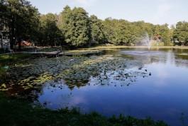 Мэрия Зеленоградска продала за 25 млн рублей участок с летним театром в городском парке