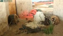В калининградском зоопарке сурикатов переселили в новый вольер