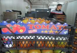 В Калининградской области уничтожили более двух тонн помидоров из Турции