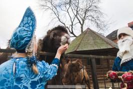 «Животный праздник»: зверям из калининградского зоопарка подарили новогодние лакомства