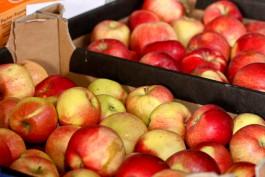 В Калининградскую область не пустили 20 тонн свежих яблок из Боснии и Герцеговины