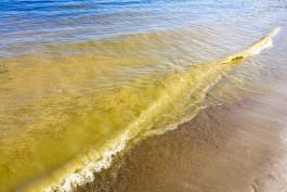 Учёный рассказал, чем опасна для отдыхающих высокая температура воды в Балтийском море