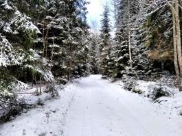 В Калининградской области выпало рекордное с начала года количество снега