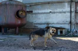 В Калининграде солдат жестоко убил собаку ради увольнительной